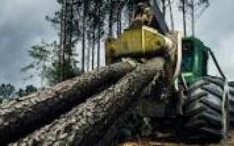 picture of logging truck